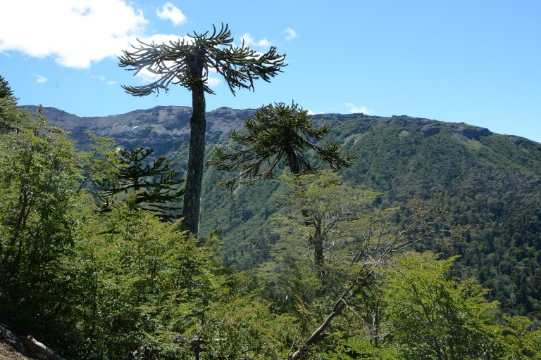 Conguillo national park (Temuco)