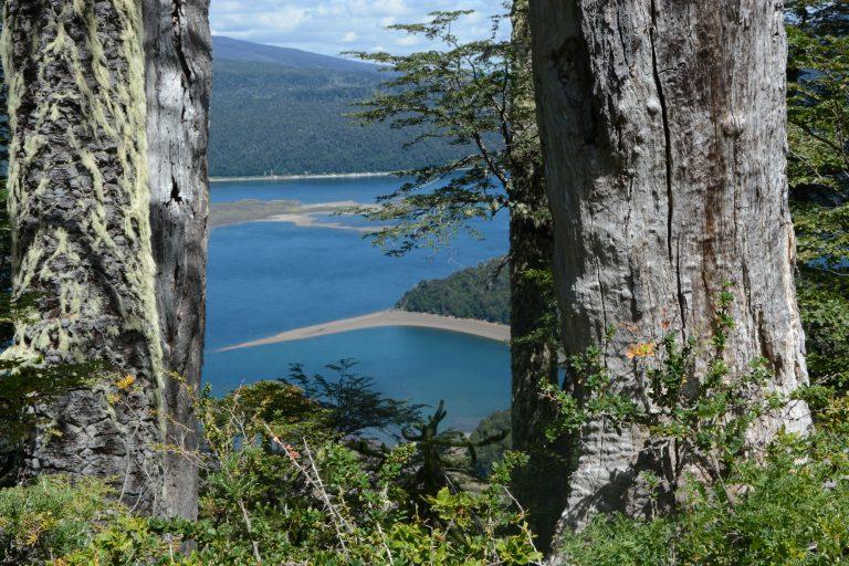 Conguillo national park (Temuco)
